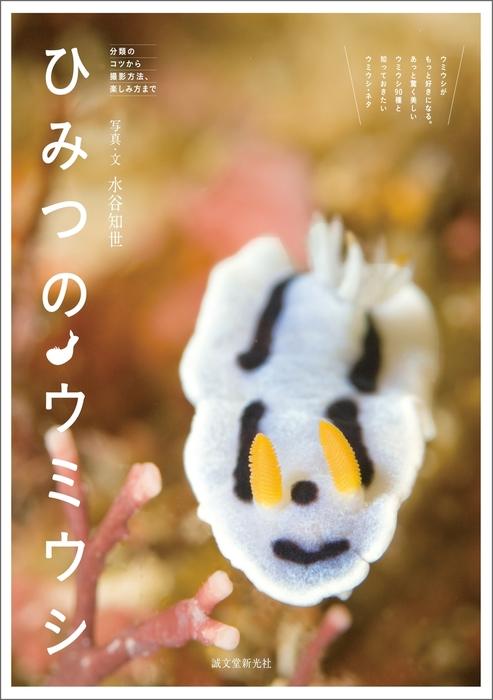 ひみつのウミウシ拡大写真