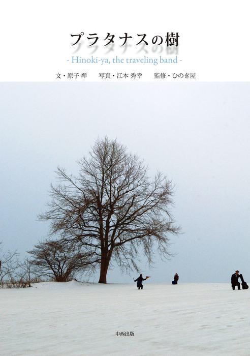プラタナスの樹拡大写真