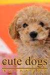 cute dogs02 トイプードル-電子書籍