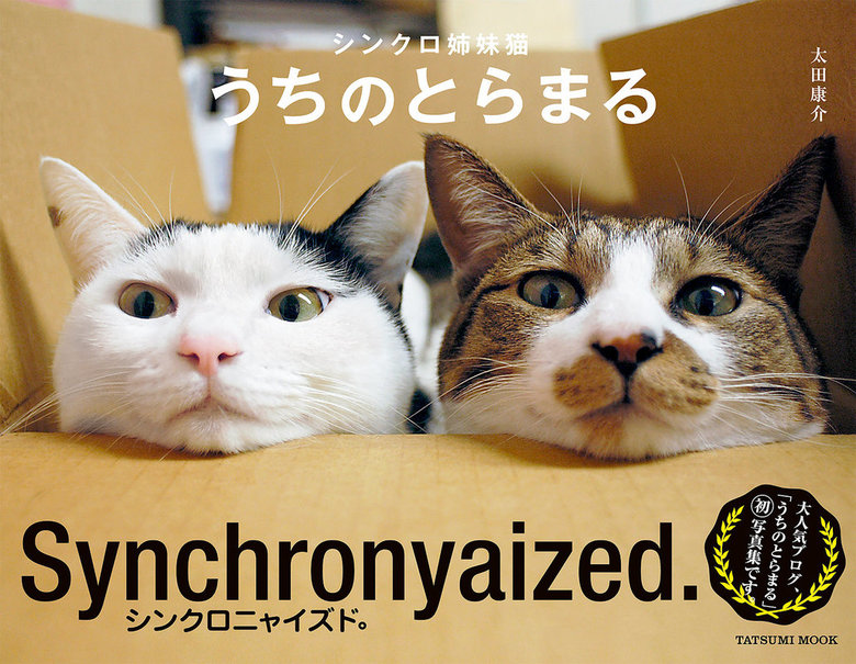 シンクロ姉妹猫 うちのとらまる拡大写真