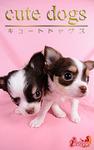 cute dogs15 チワワ-電子書籍