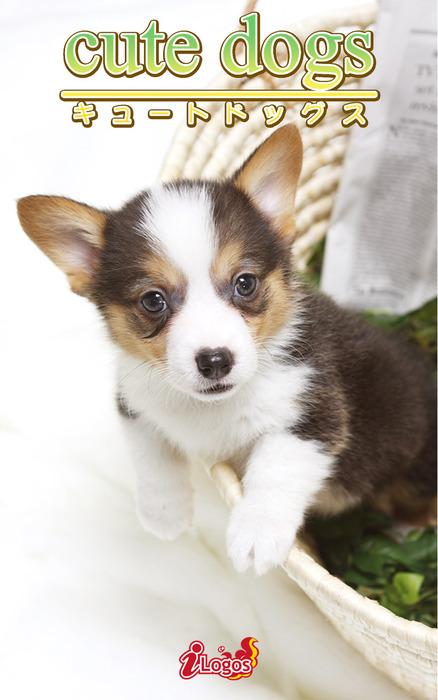 cute dogs35 ウェルシュ・コーギー拡大写真