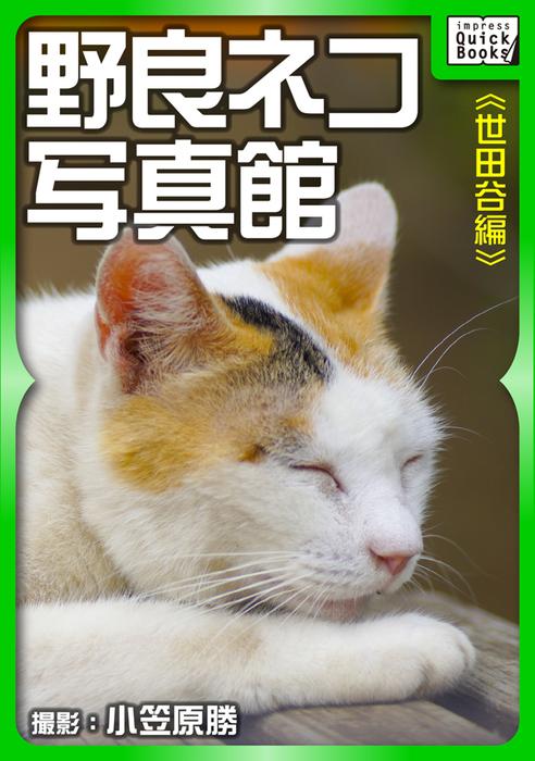 野良ネコ写真館【世田谷編】拡大写真