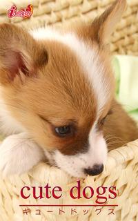 cute dogs33 ウェルシュ・コーギー
