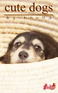 cute dogs22 ダックスフンド