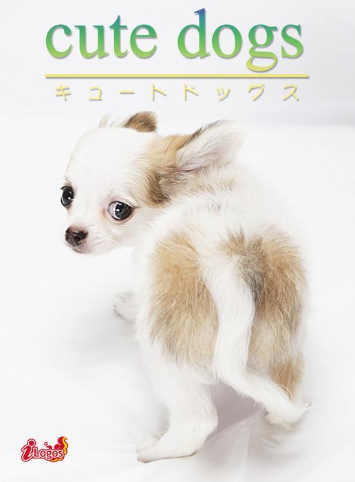 cute dogs12 チワワ拡大写真