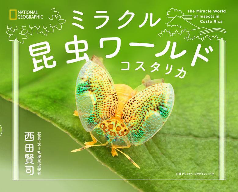 ミラクル昆虫ワールド コスタリカ拡大写真