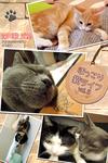 ほっこり猫ライフ vol.5-電子書籍