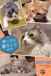 ほっこり猫ライフ vol.12