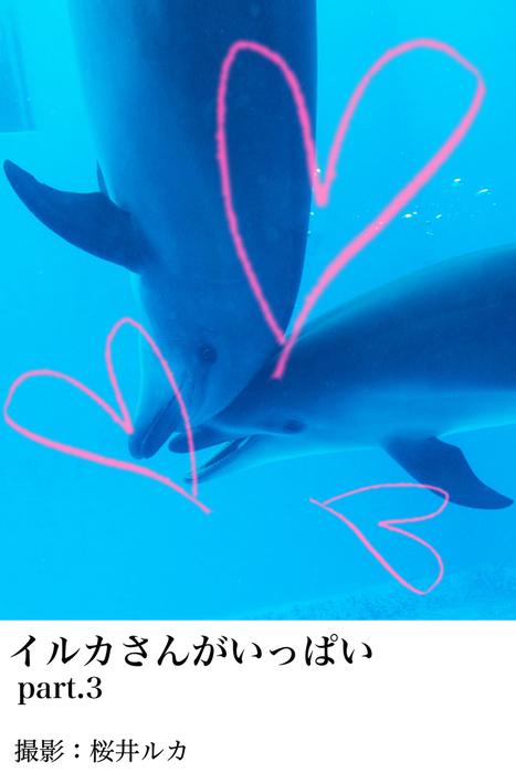 イルカさんがいっぱいpart.3拡大写真