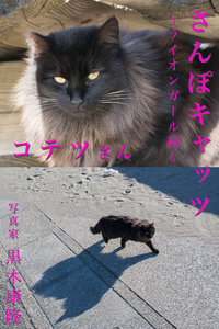 さんぽキャッツ コテツさん ~ライオンガール編~