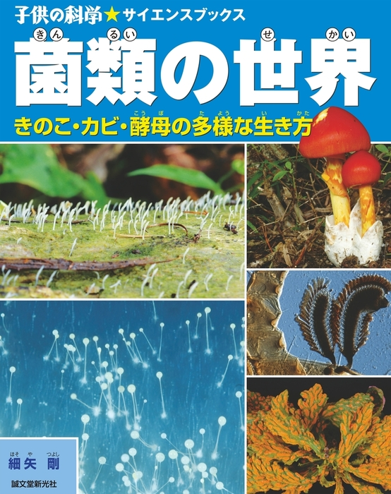 菌類の世界拡大写真