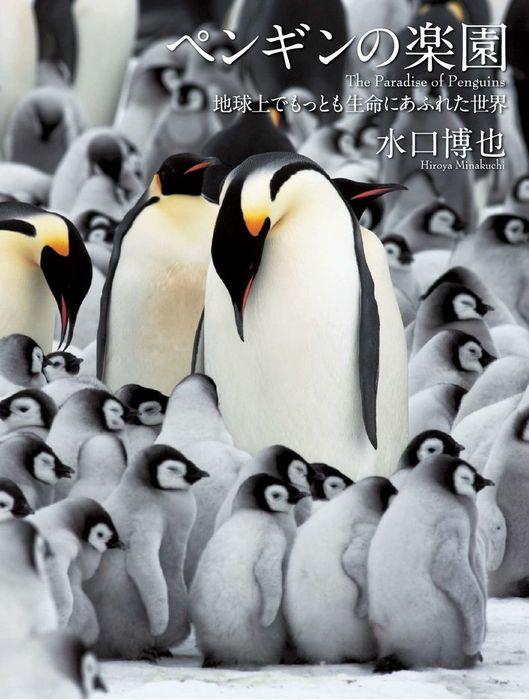 ペンギンの楽園 地球上でもっとも生命にあふれた世界拡大写真