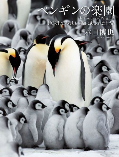 ペンギンの楽園 地球上でもっとも生命にあふれた世界-電子書籍