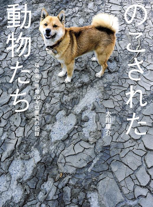 のこされた動物たち――福島第一原発20キロ圏内の記録拡大写真