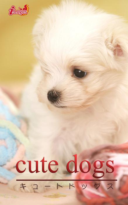 cute dogs32 マルチーズ拡大写真