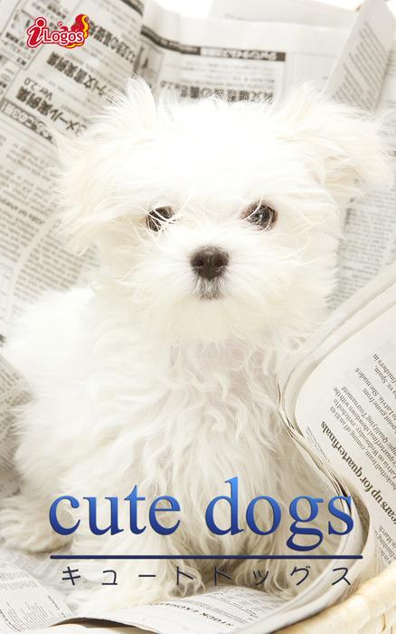 cute dogs31 マルチーズ拡大写真