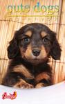cute dogs25 ダックスフンド-電子書籍