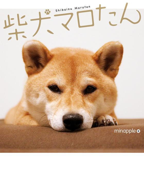柴犬マロたん拡大写真