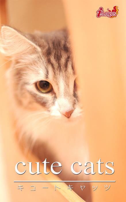 cute cats17 ノルウェージャンフォレストキャット拡大写真