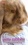 cute rabbits03 ミニロップ-電子書籍