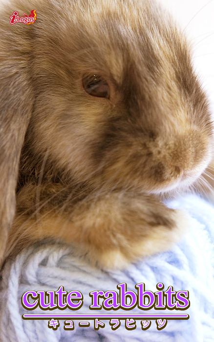 cute rabbits03 ミニロップ拡大写真