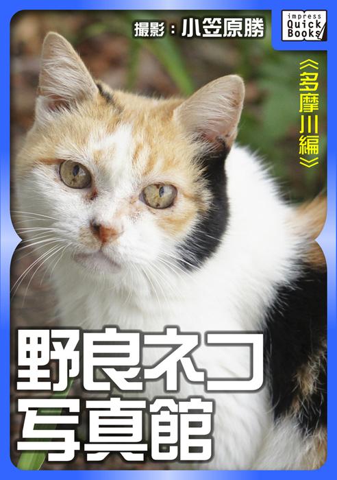 野良ネコ写真館【多摩川編】-電子書籍-拡大画像