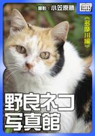 野良ネコ写真館【多摩川編】