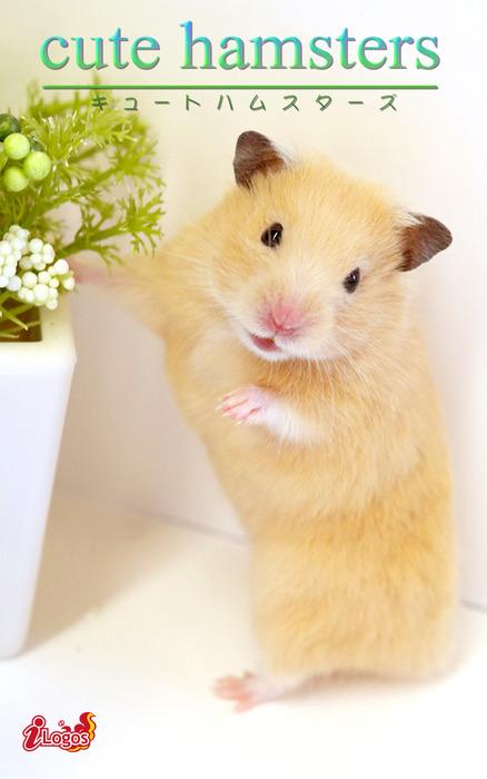 cute hamsters03 キンクマハムスター-電子書籍-拡大画像