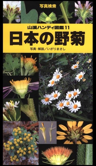 ヤマケイハンディ図鑑11 日本の野菊-電子書籍-拡大画像