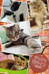 ほっこり猫ライフ vol.10-電子書籍