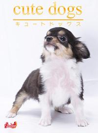 cute dogs11 チワワ