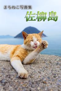 まちねこ写真集・佐柳島