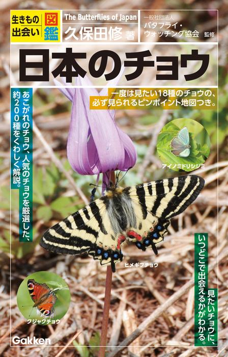日本のチョウ拡大写真