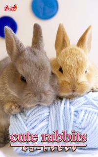 cute rabbits02 ミニウサギ