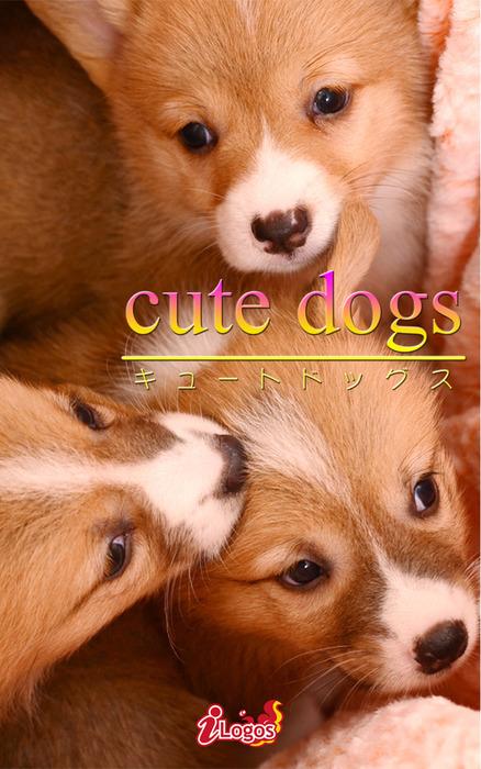 cute dogs34 ウェルシュ・コーギー拡大写真