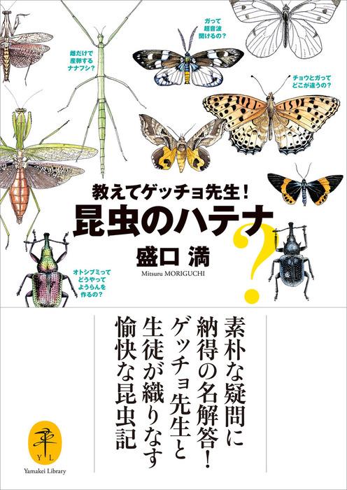 ヤマケイ文庫 教えてゲッチョ先生!昆虫のハテナ拡大写真
