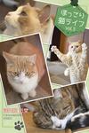 ほっこり猫ライフ vol.3-電子書籍