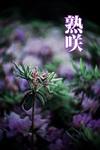 熟咲-電子書籍