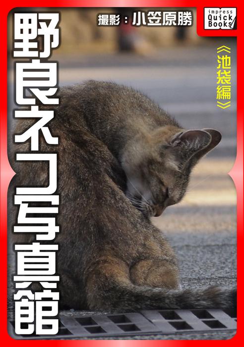 野良ネコ写真館【池袋編】拡大写真