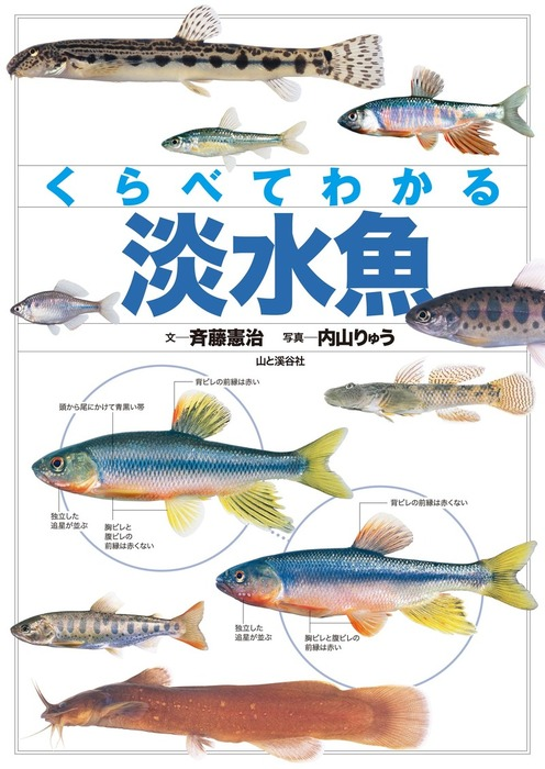 くらべてわかる 淡水魚拡大写真