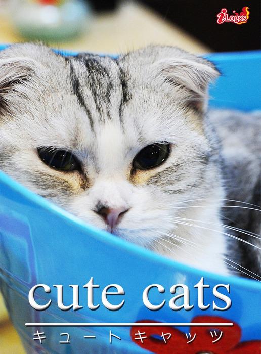 cute cats01 スコティッシュ・フォールド拡大写真