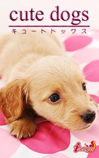 cute dogs26 ダックスフンド