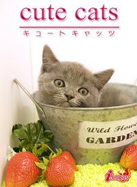 cute cats12 ブリティッシュショートヘア
