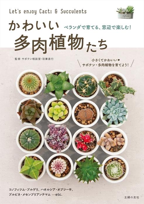 かわいい多肉植物たち拡大写真