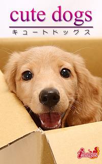 cute dogs24 ダックスフンド