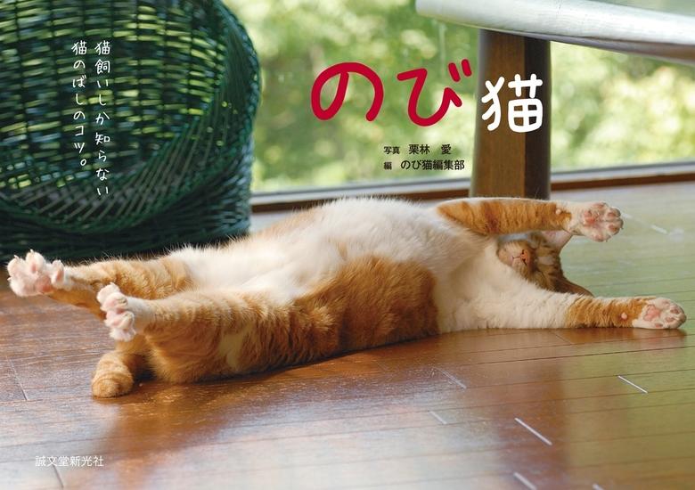 のび猫拡大写真