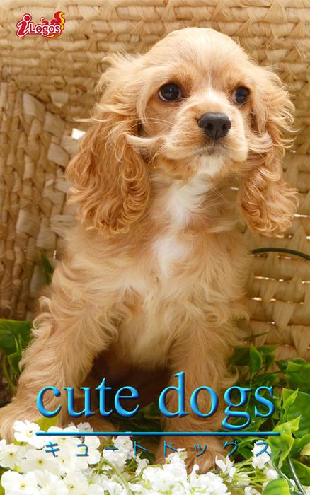 cute dogs36 アメリカンコッカースパニエル拡大写真