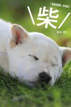 \柴/ SHIBA-INU