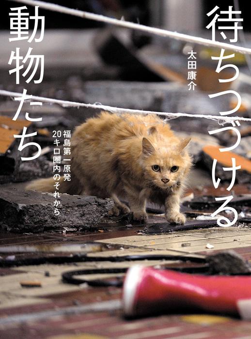 待ちつづける動物たち――福島第一原発20キロ圏内のそれから拡大写真